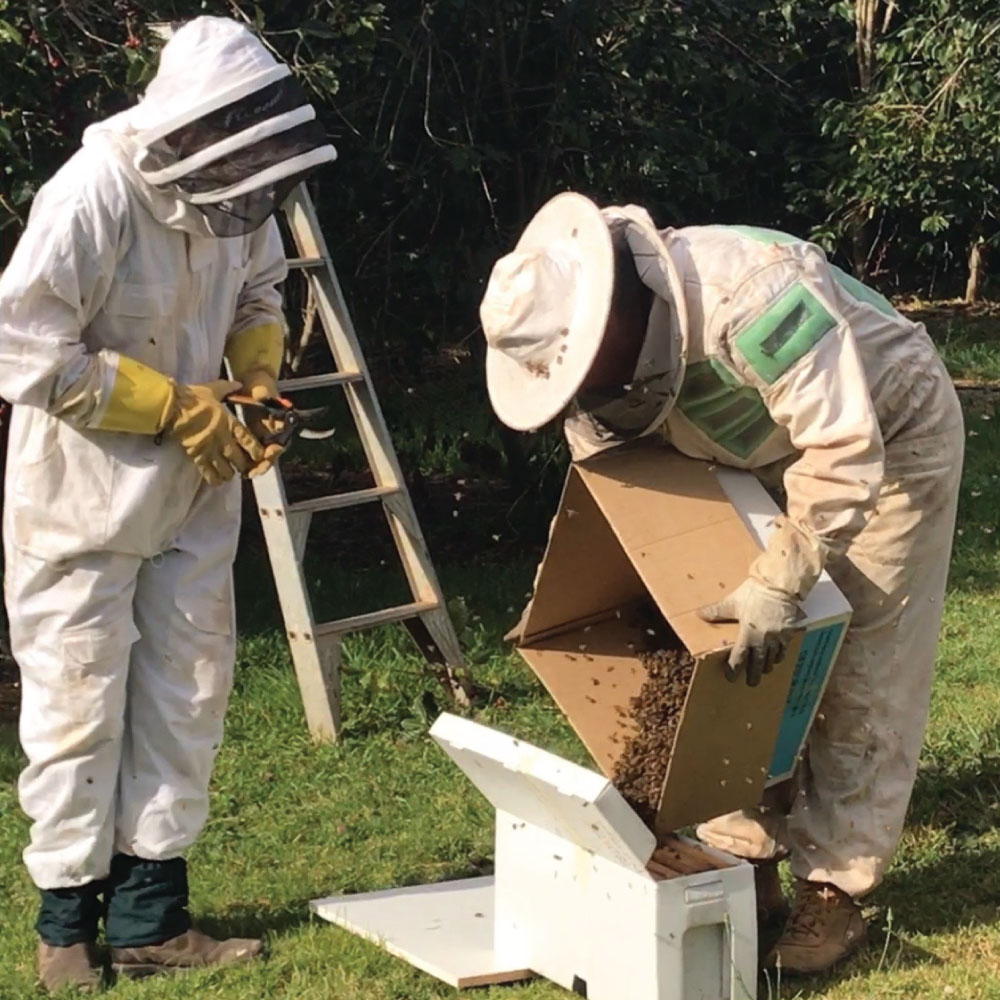bees-in-box